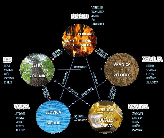Kako se 5 elementov odraža v telesu